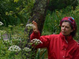 Según la bióloga Matilde Zúcaro, tresarroyense que volvió a radicarse en esta zona después de décadas, Claromecó encierra un tesoro en estas plantas que es necesario cuidar y proteger