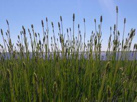 """""""Hoy tenemos unas 500 plantas y estamos armando una plantación paralela, porque cada una tiene una vida útil y productiva de unos 12 años como máximo"""", explica Elena Di Rocco"""