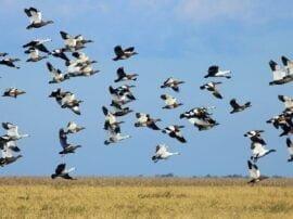 Las aves marítimas son parte del atractivo que ofrecen nuestras playas